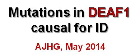 Paper in AJHG 2014 about DEAF1
